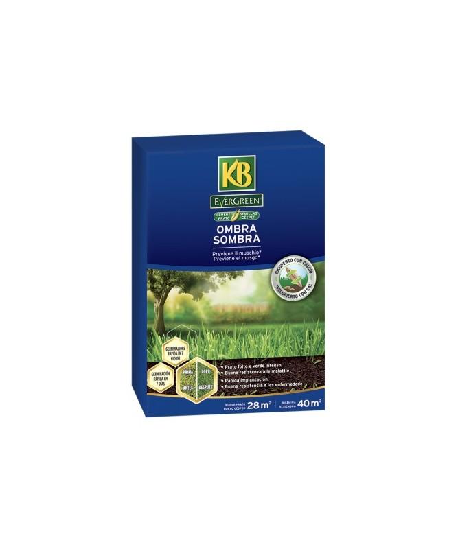OMBRA evergreen- KG.1