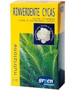 RINVERDENTE CYCAS GR.100